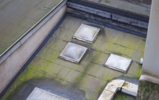 What-You-Need-to-Know-About-Roof-Rot